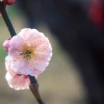 flower1-008